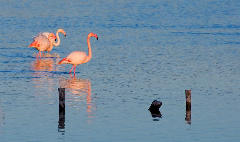 El avistamiento de aves de la Región se promociona en FIO como alternativa de turismo seguro, sostenible y de naturaleza. Imagen: CARM