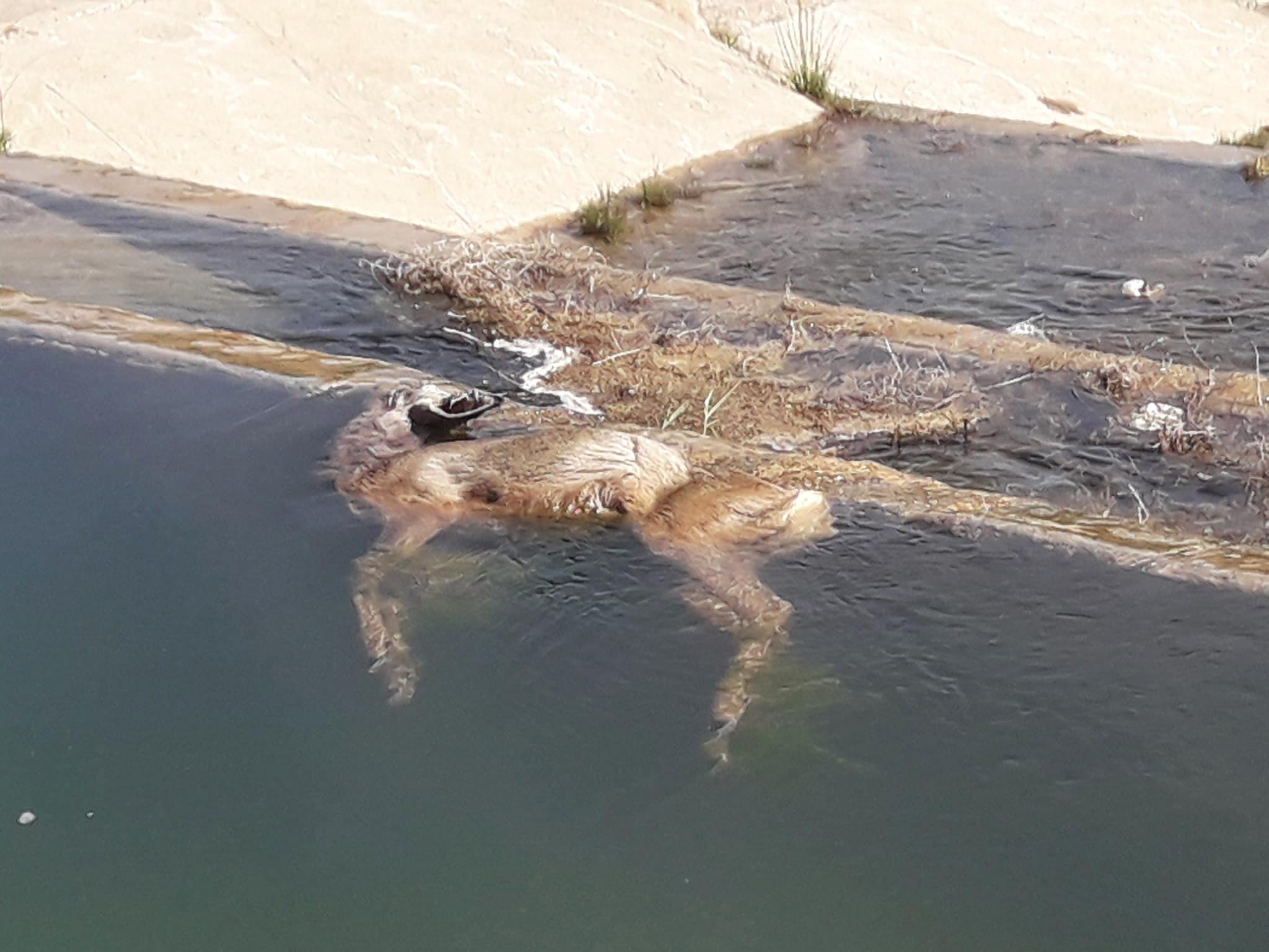 Un ejemplar dentro del agua. Imagen: Apamcv