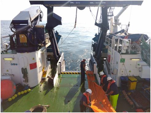 La campaña se ha desarrollado a bordo del Buque Oceanográfico Ramón Margalef del IEO. Imagen: IEO