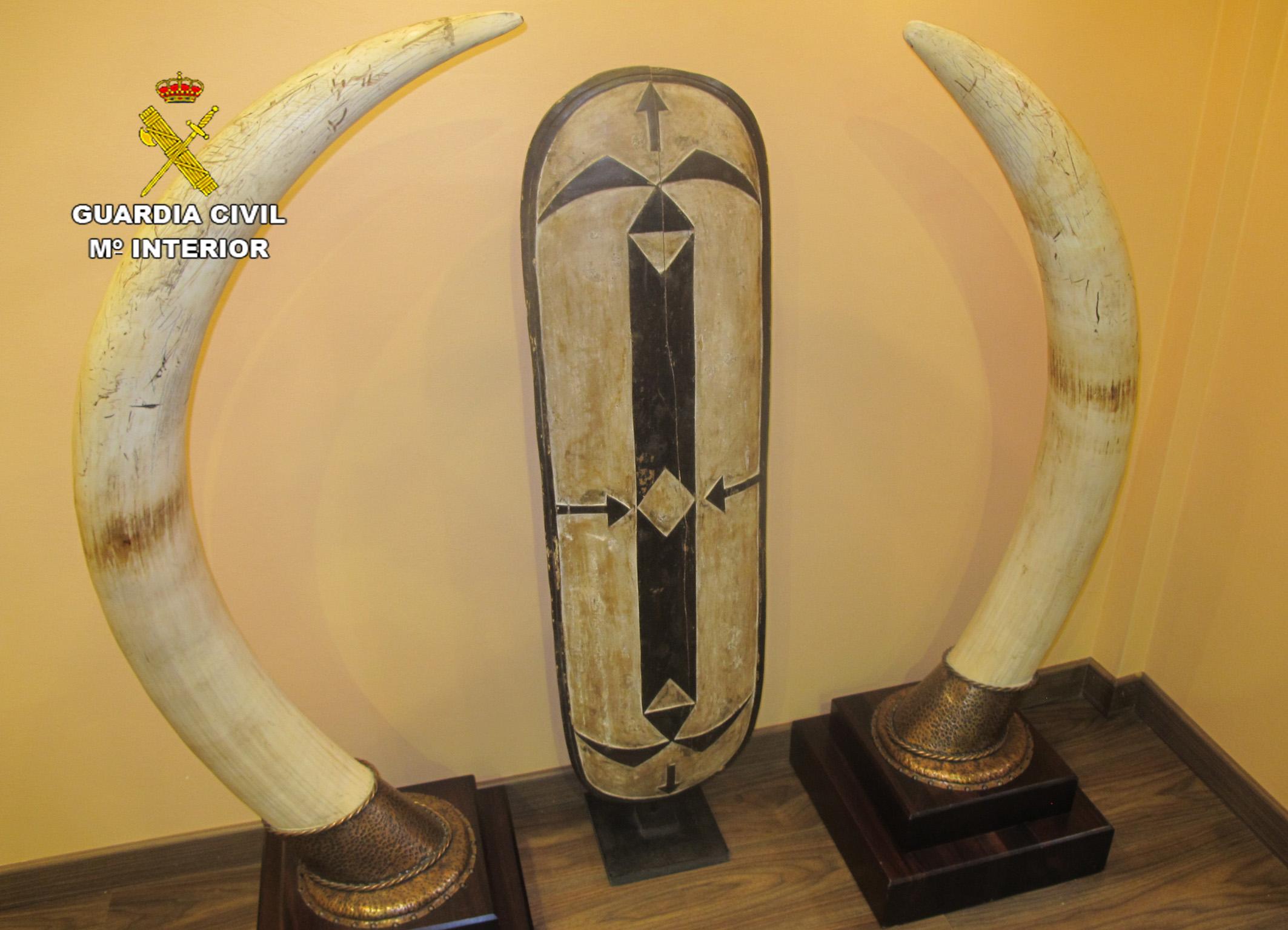 Colmillos de elefante. Imagen: Seprona