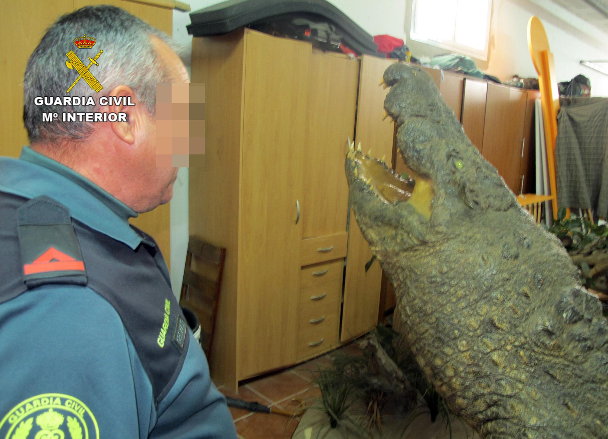 El agente ante un cocodrilo. Imagen: Seprona