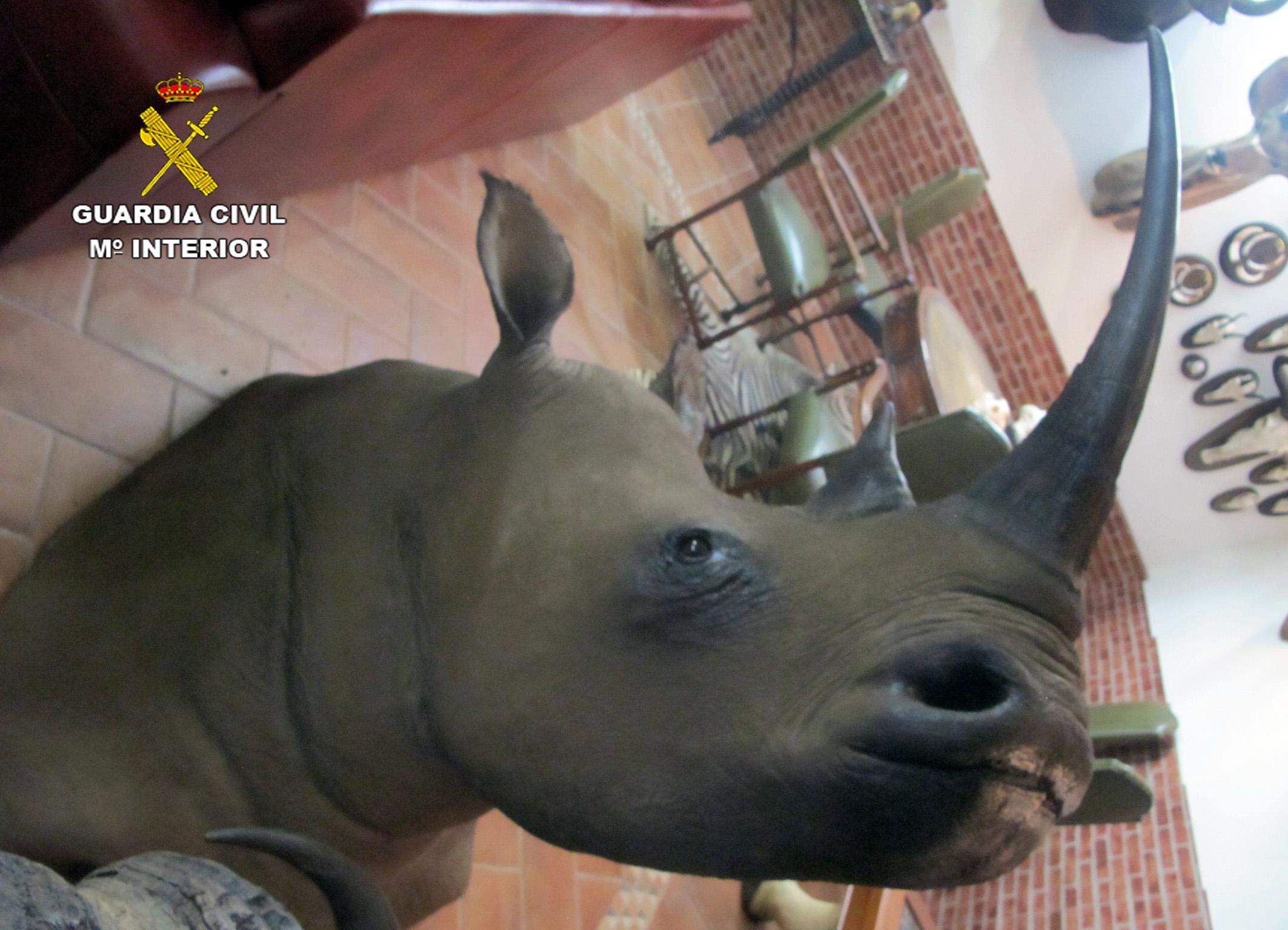 Cabeza de rinoceronte. Imagen: Seprona