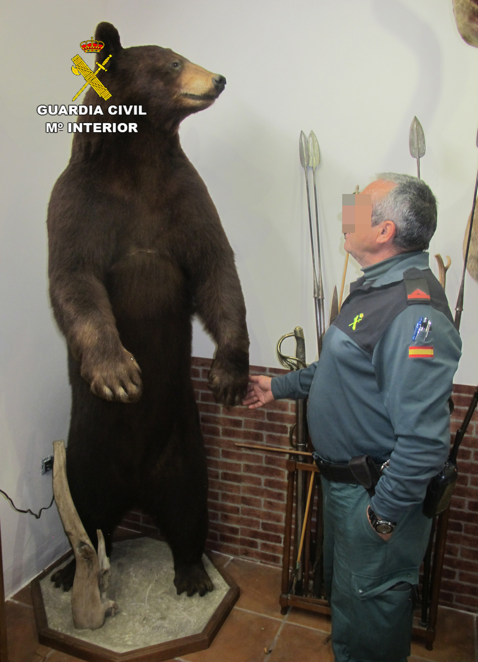 Un agente contempla un oso naturalizado. Imagen: Seprona