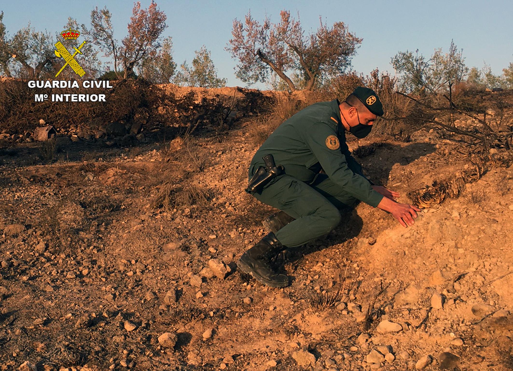 Investigando el incendio forestal en Barinas. Imagen: Guardia Civil