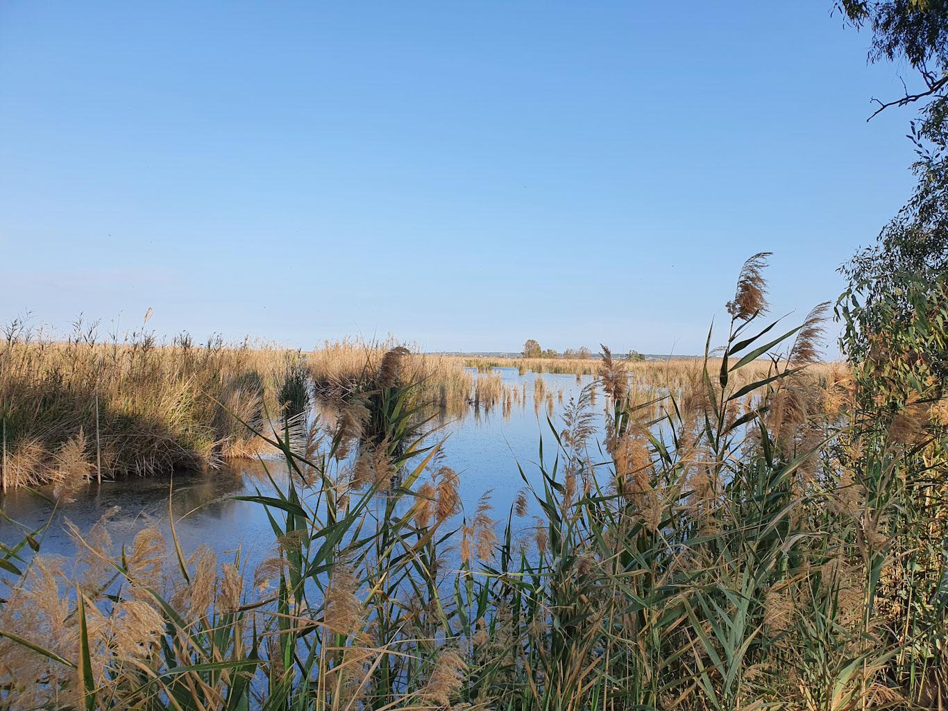 La finca está formada por lagunas con amplias praderas de plantas acuáticas, y se sitúa en áreas vitales para la supervivencia de la especie. Imagen: Miteco