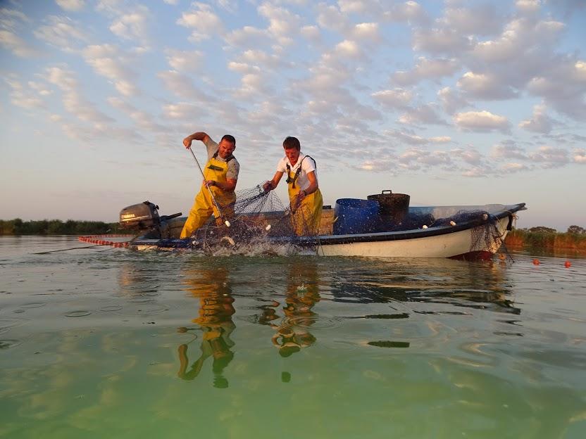 Extracción de carpa mediante pesca artesanal en El Hondo. Imagen: ANSE