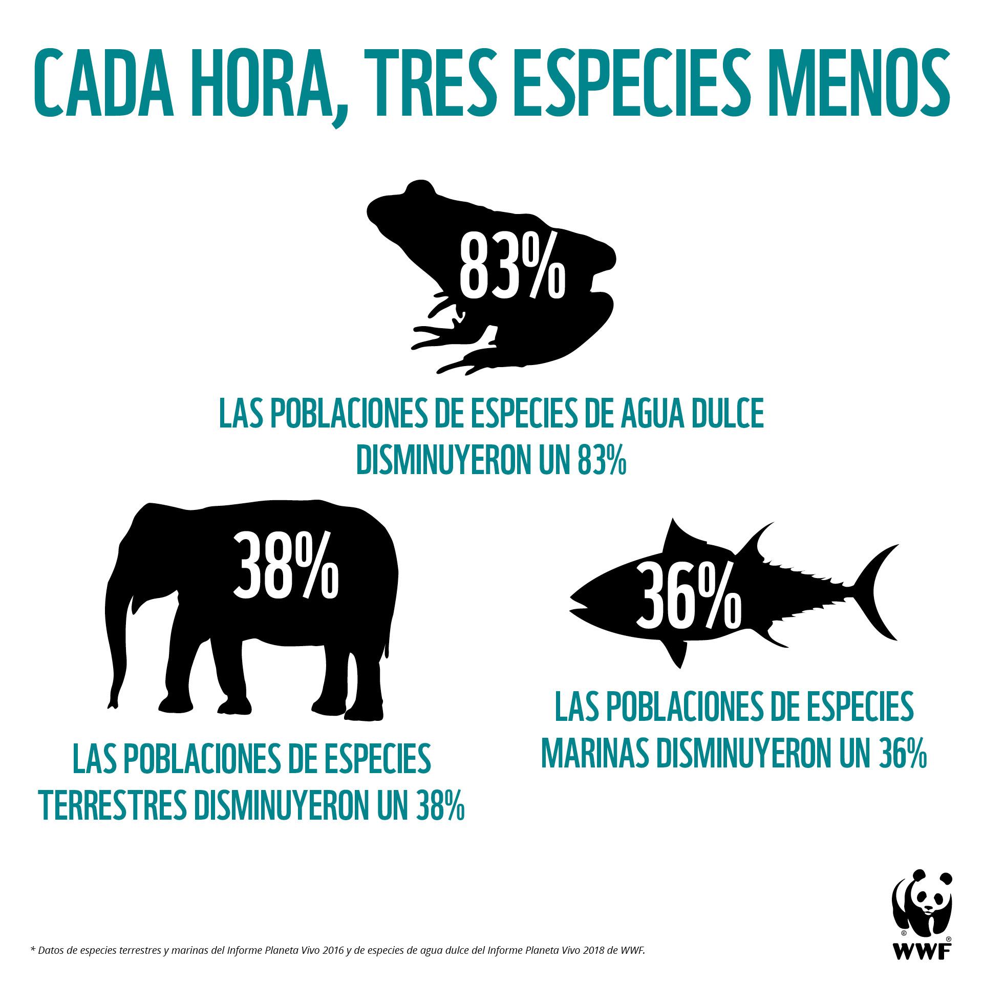 Cada hora, desaparecen tres especies en el mundo. Imagen: WWF