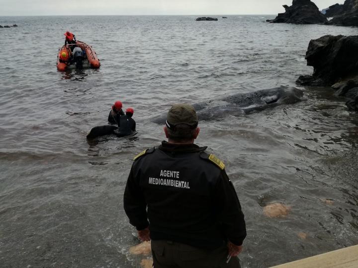 El cachalote que apareció varado cerca del faro de Cabo de Palos el pasado 27 de febrero. Imagen: CARM