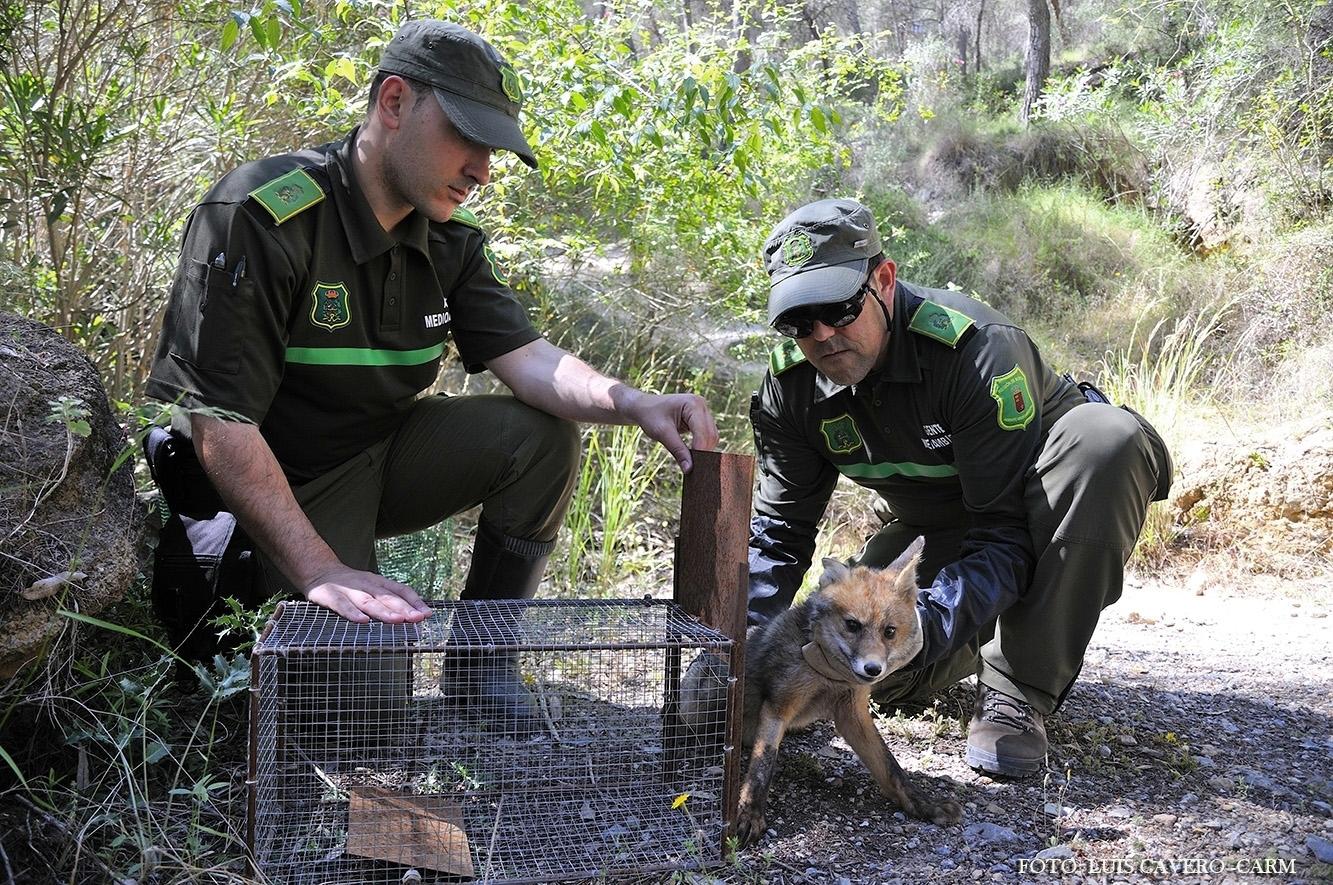 Agentes medioambientales en su trabajo contra prácticas ilegales en el medio natural. Imagen: CARM