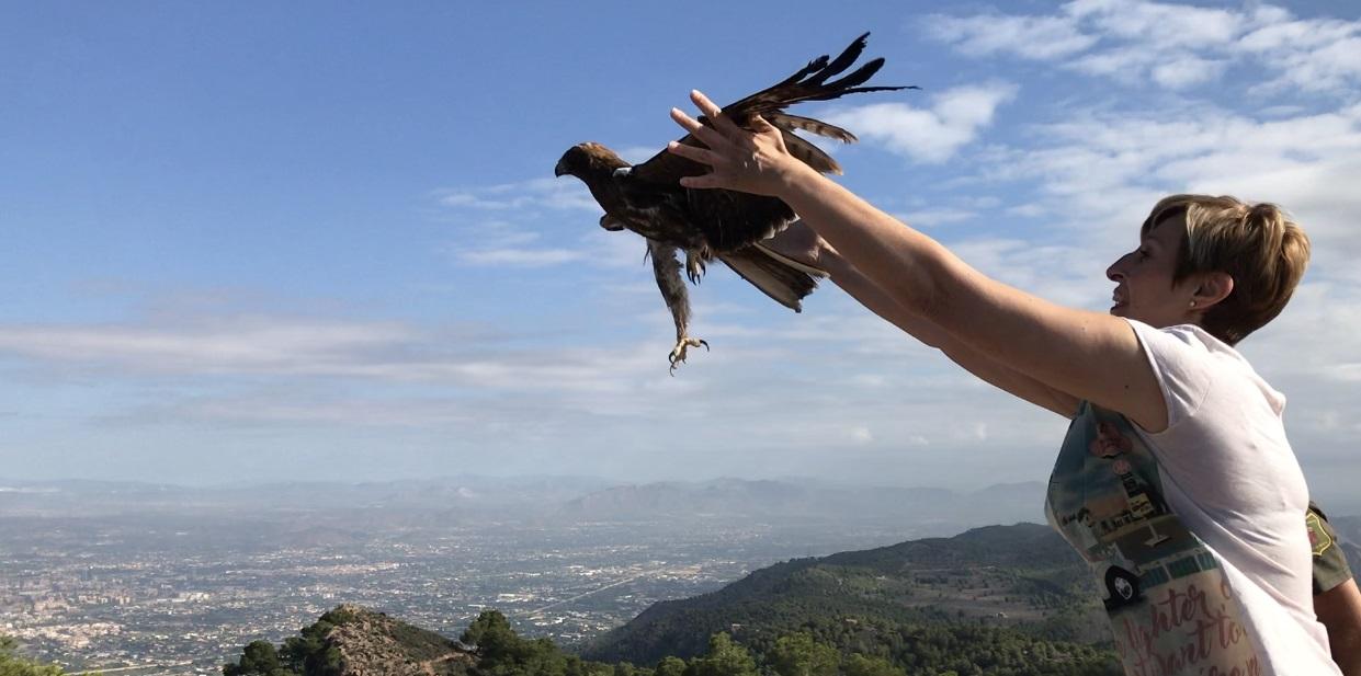 Suelta del águila tratada en el Centro de Recuperación de la Fauna Silvestre de El Valle. Imagen: CARM
