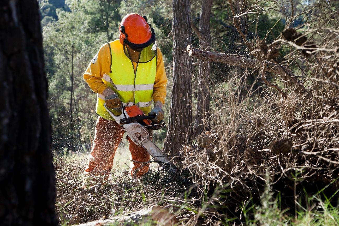 Trabajos preventivos contra incendios forestales. Imagen: CARM