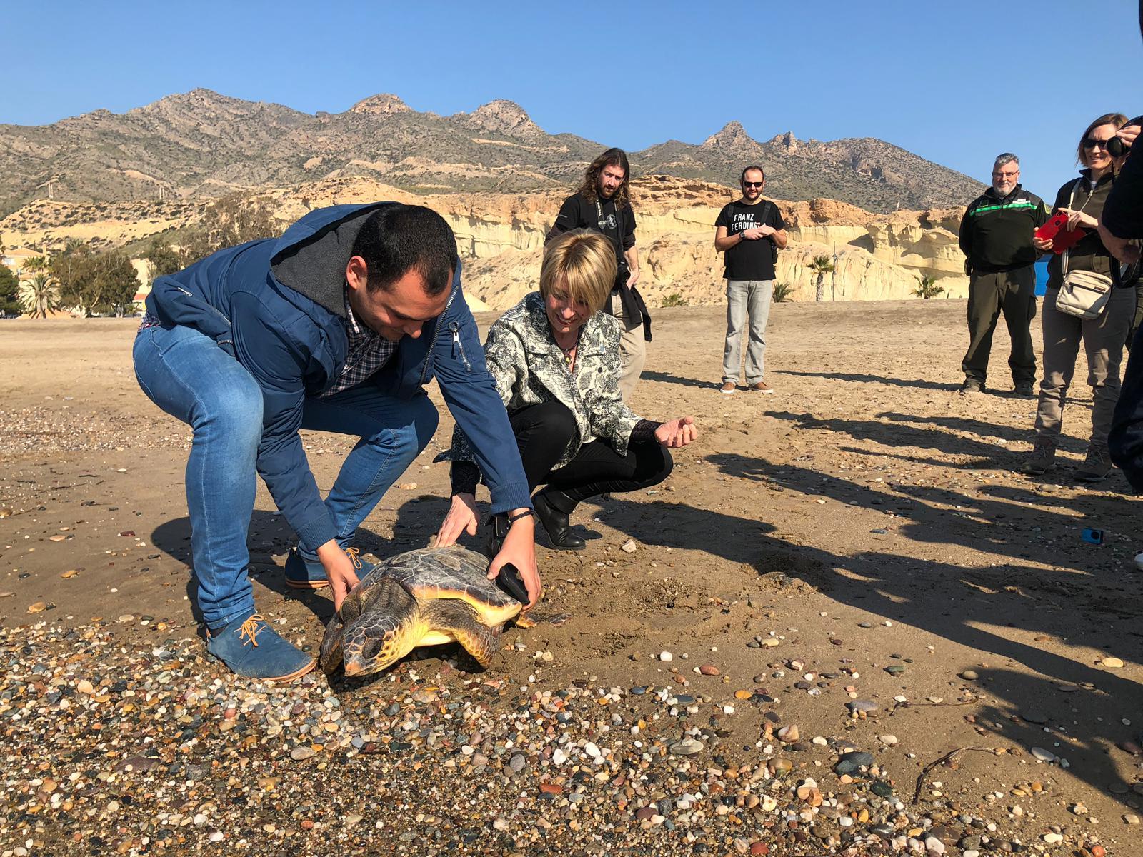 Imagen de la liberación de una tortuga boba tratada en el Centro de Recuperación de Fauna Silvestre de El Valle. Imagen: CARM