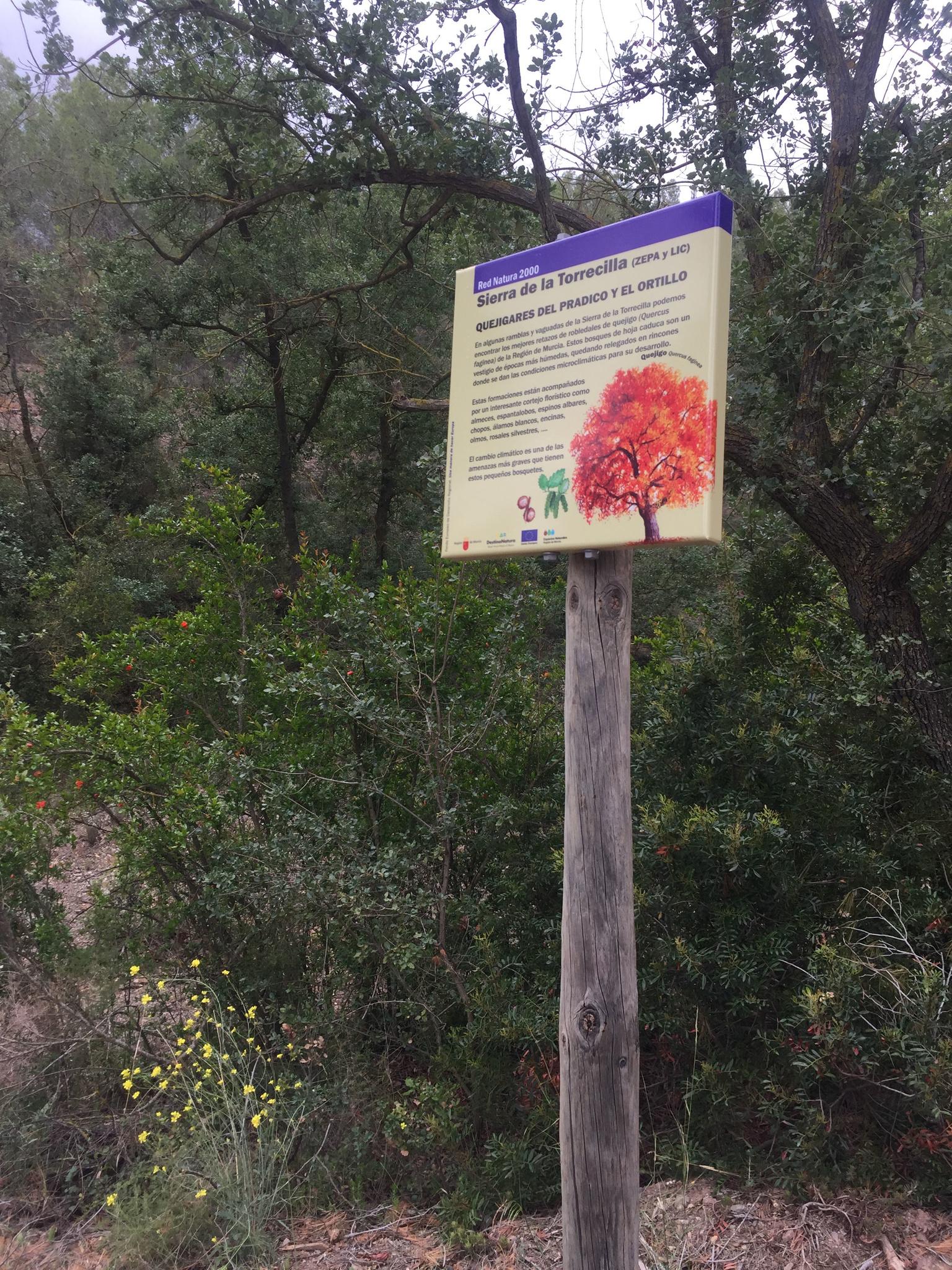 Actuaciones de acondicionamiento y mejora del bosquete de la Rambla del Hortillo. Imagen: CARM