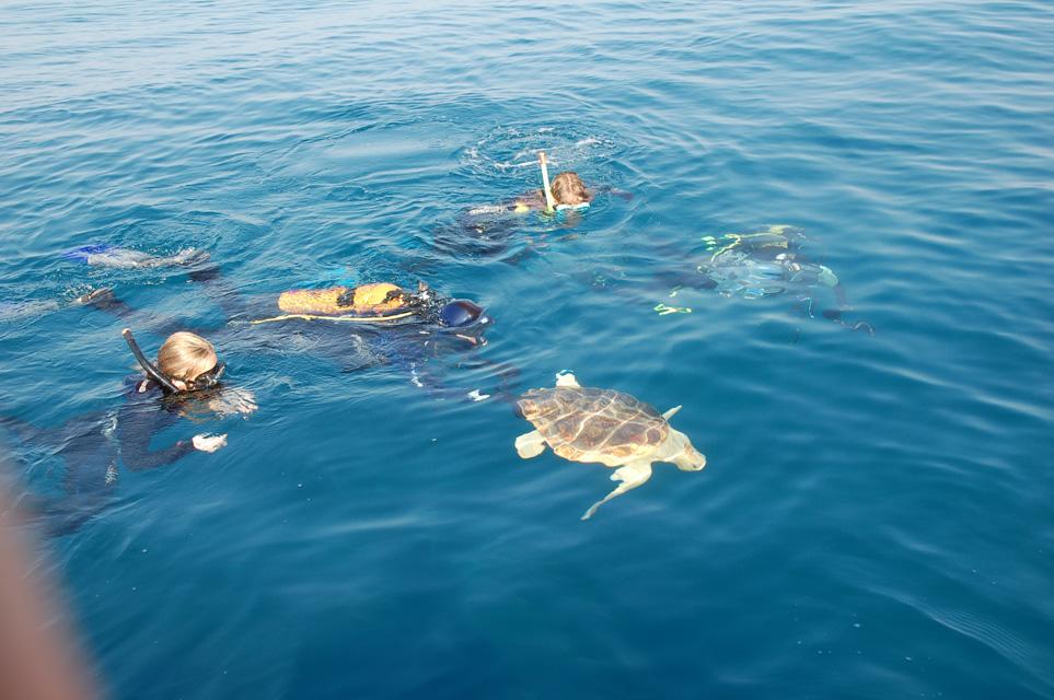 Varios buceadores contemplan una tortuga marina. Imagen: CARM