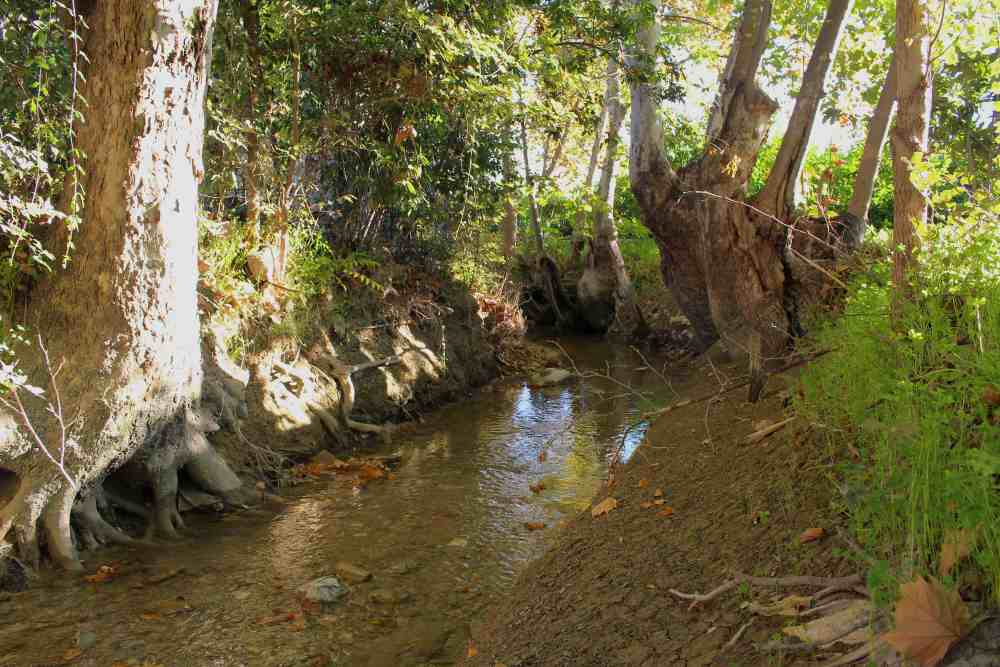 Acequia natural en la Huerta de Murcia. Imagen: Huermur