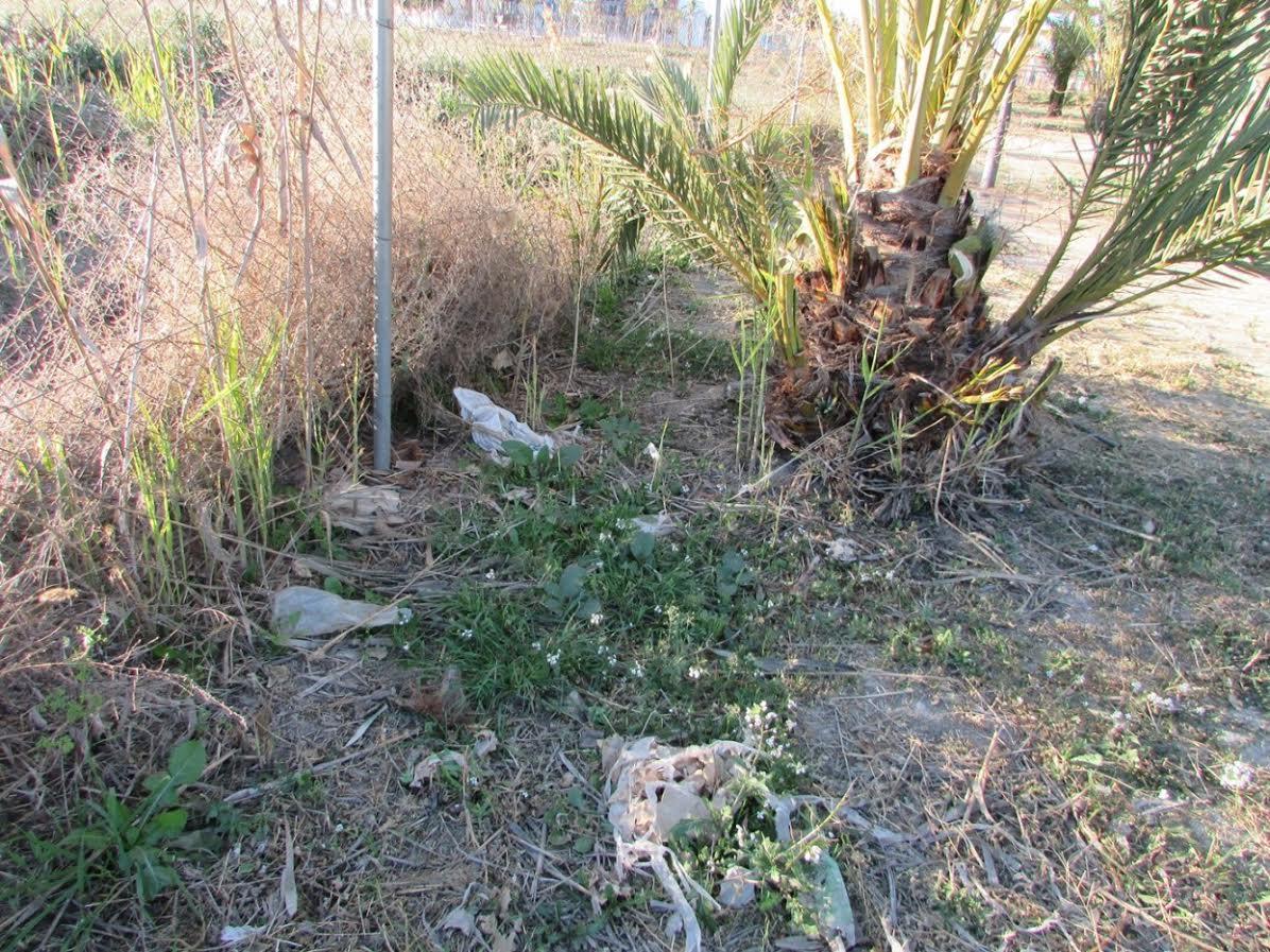 Acumulación de basuras en el Palmeral Chico de Zaraiche. Imagen: Huermur