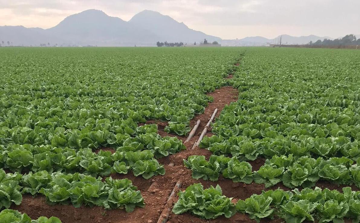 Agricultura en el Campo de Cartagena. Pacto por el Mar Menor