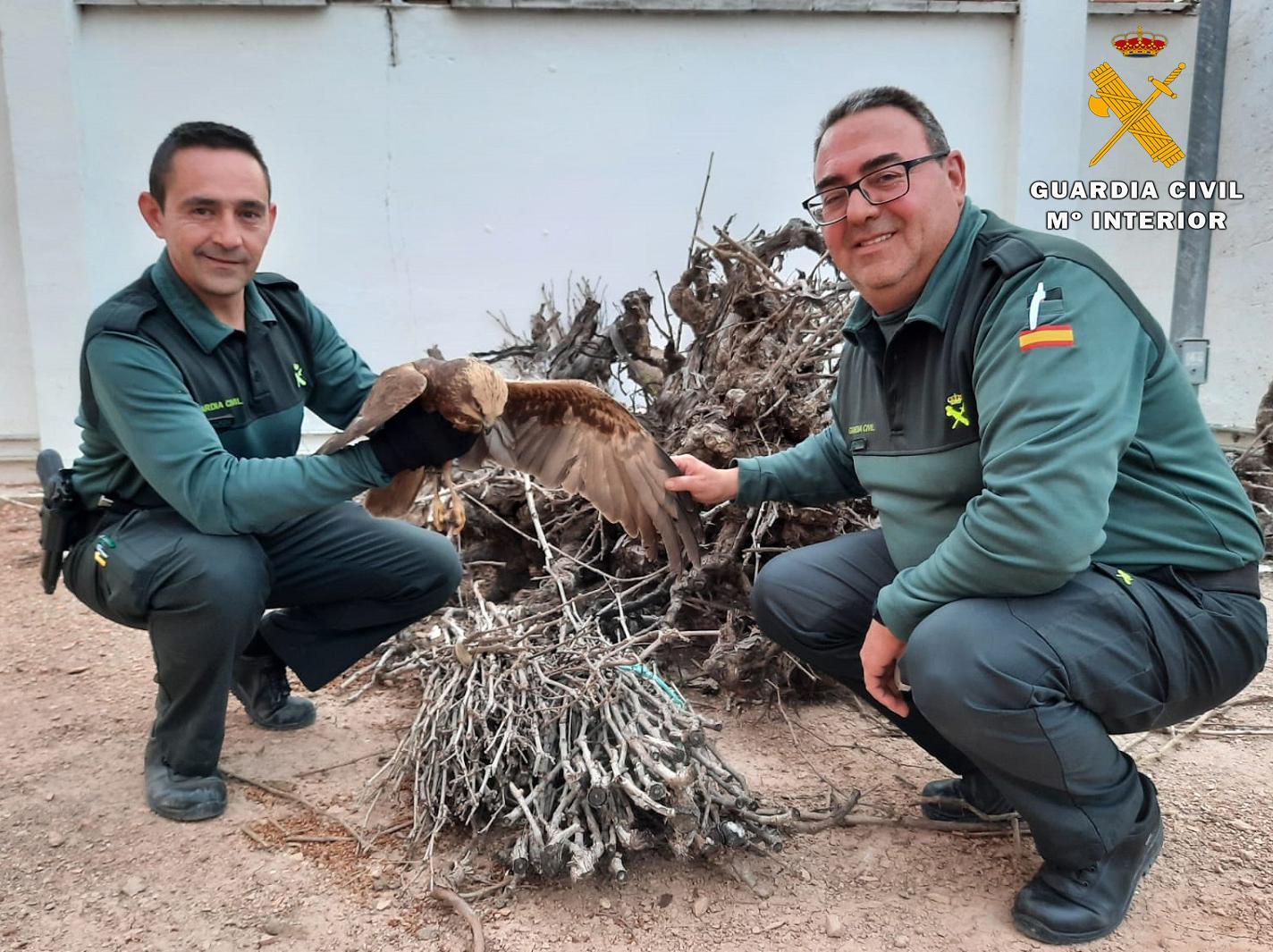 Dos agentes de la Guardia Civil con el aguilucho lagunero rescatado. Imagen: Seprona