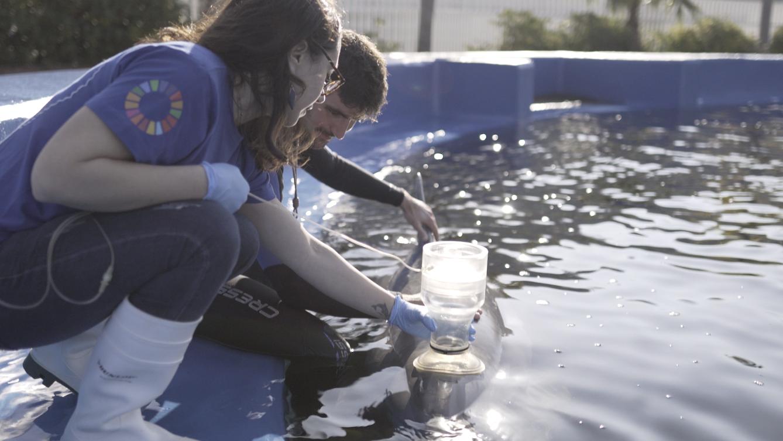 Alicia Borque haciendo una espirometría al delfín Josué con el cuidador David Peula. Imagen: Fundación Oceanogràfic
