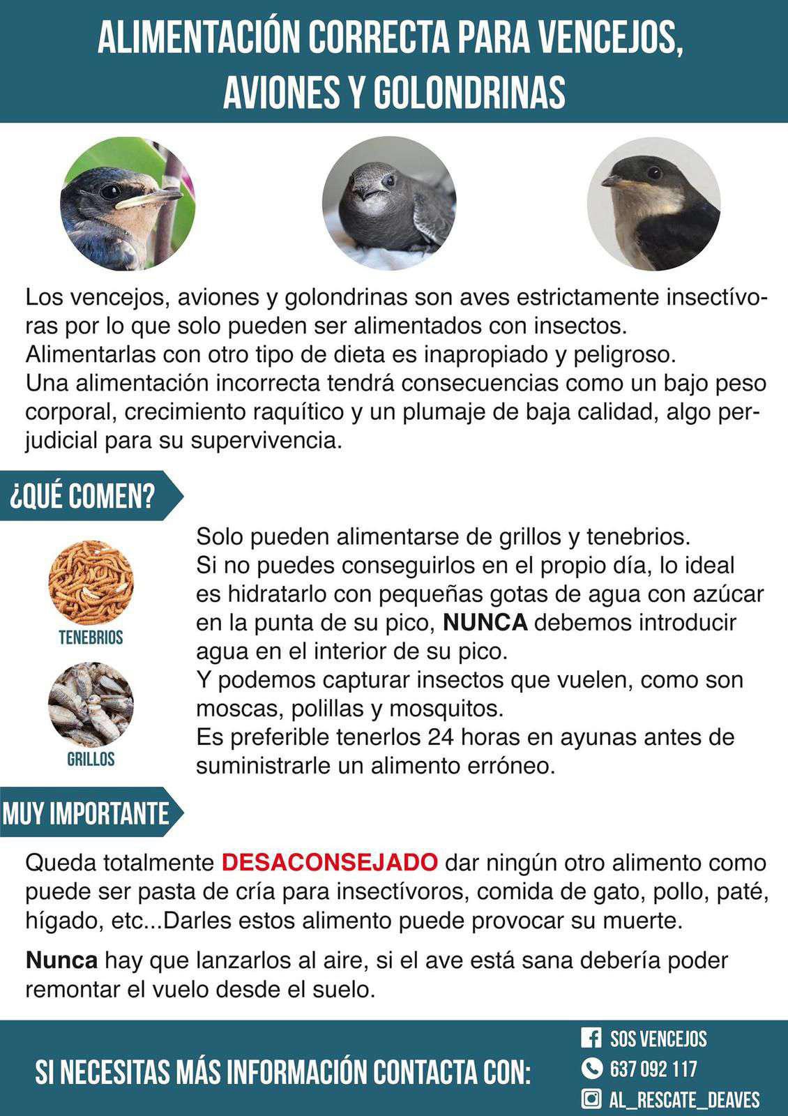 Recomendaciones de alimentación de vencejos, de SOS Vencejos