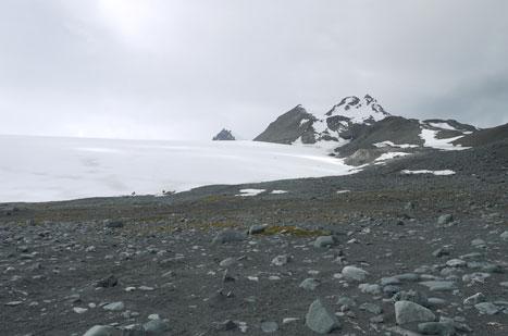 Área de la Antártida expuesta a la colonización biológica por retroceso del Glaciar Hurd. Imagen: Isla Livingston / MNCN.