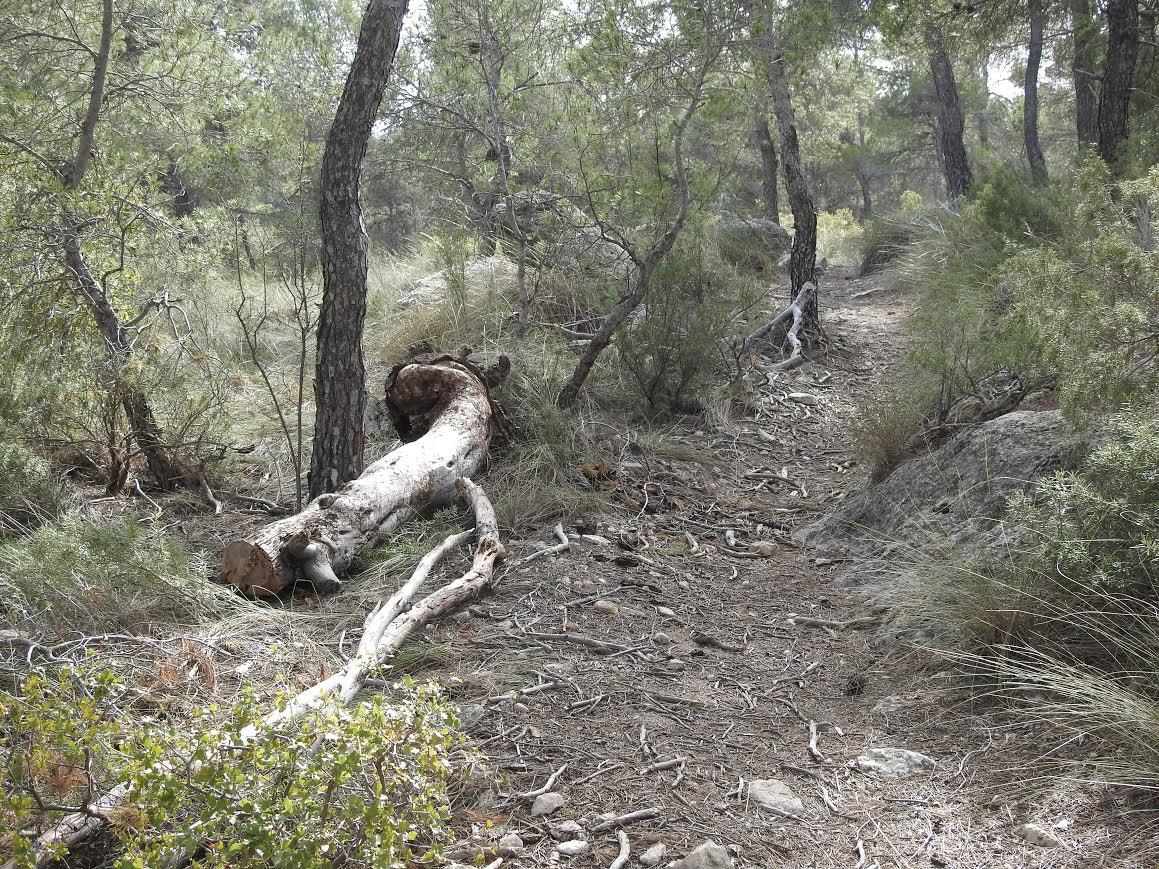 Retirada de tocones y otros obstáculos naturales instalados para impedir el paso a algunas de las sendas del Monte Arabí. Imagen: Anida