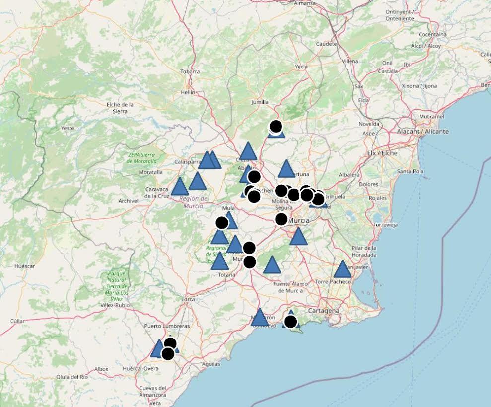Triángulos: refugios conocidos de murciélago ratonero patudo en la Región de Murcia. Círculos: zonas de caza localizadas entre marzo y septiembre de 2020. Imagen: ANSE