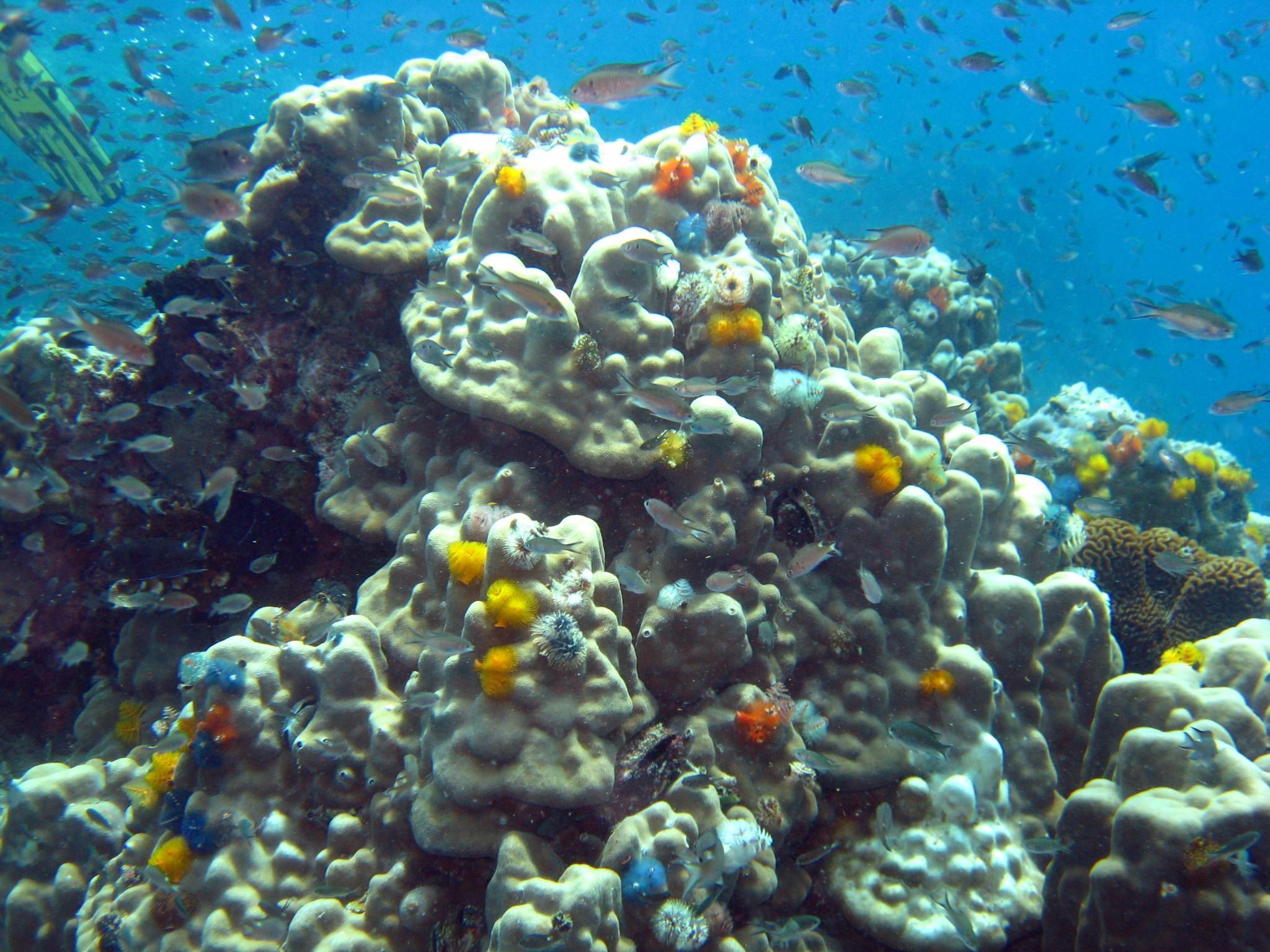 Arrecife de coral en Tailandia. Imagen: Marta Coll, ICM-CSIC