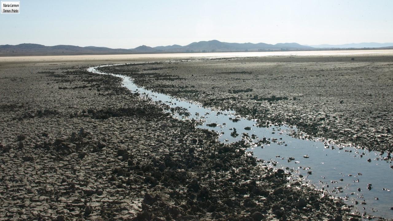 Arroyo de agua dulce en la Laguna de Gallocanta en septiembre de 2019. El arroyo transcurre por el fondo seco de la laguna, una situación frecuente en años recientes y que impide que las grullas duerman protegidas. Imagen: Carmen Tornos / MNCN
