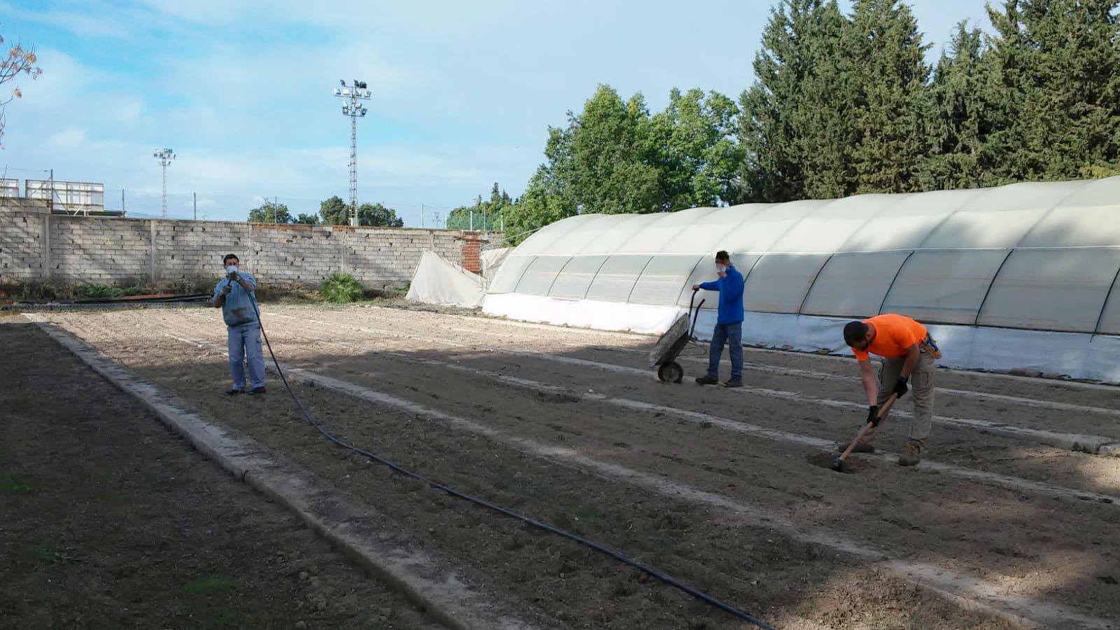 Hace unos meses se recogieron miles de semillas de distintas especies que llenan los jardines de Murcia. Imagen: Ayto. de Murcia