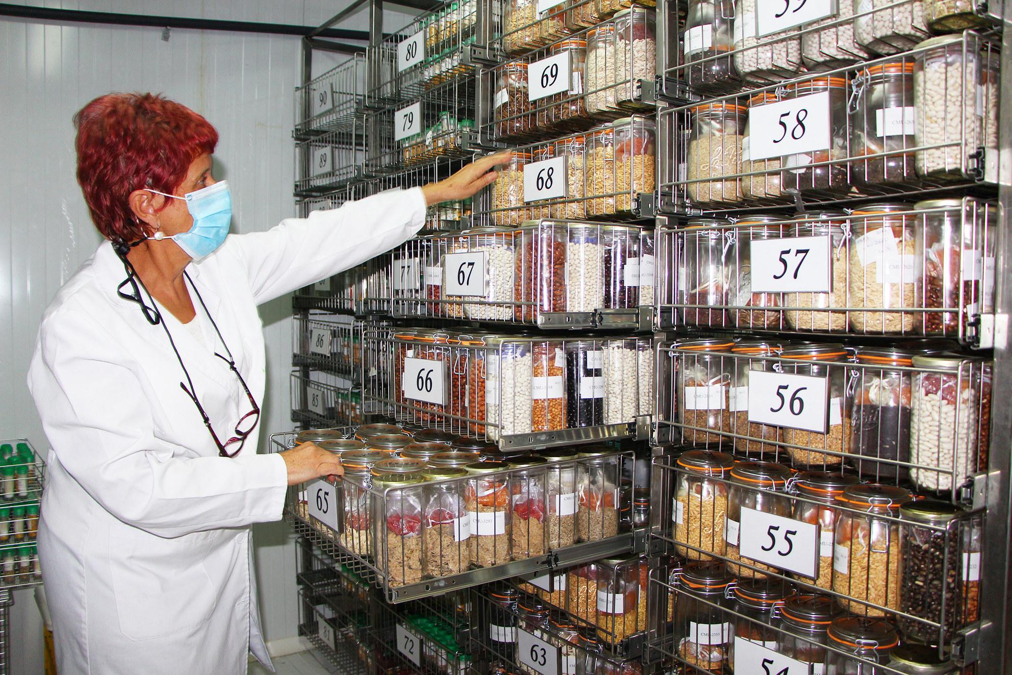 Una operaria maneja algunas de las variedades conservadas por el Imida. Imagen: CARM