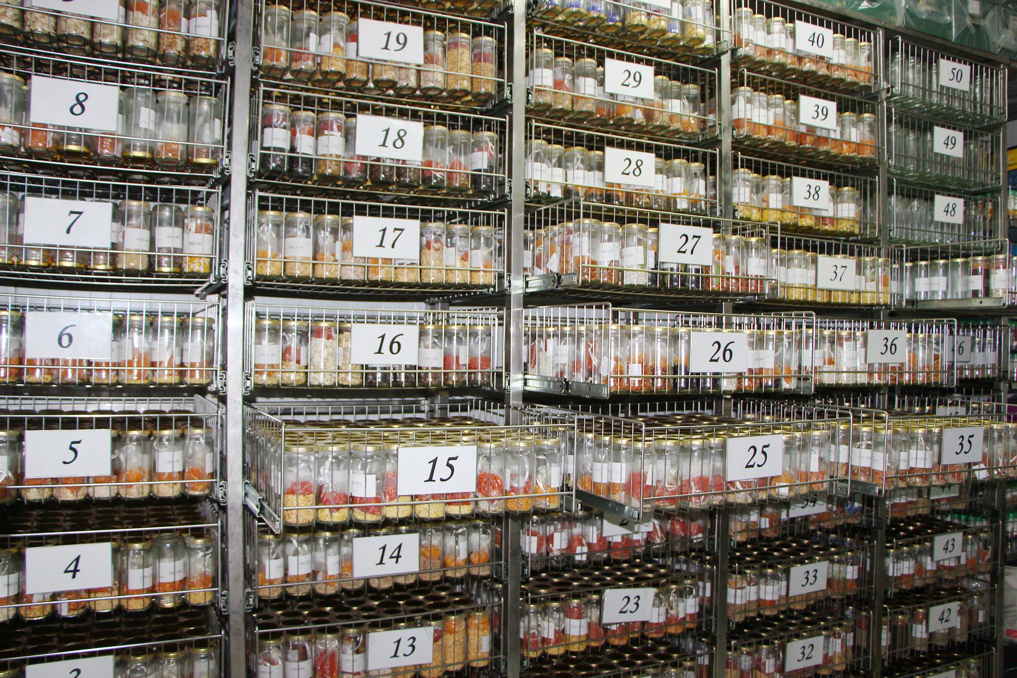 El 95 por ciento de las variedades almacenadas en el Bagerim son semillas. Imagen: CARM