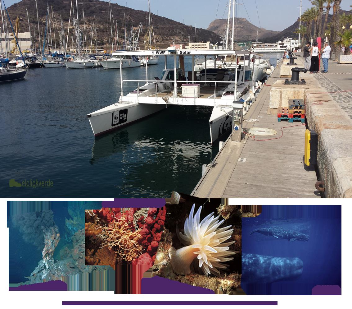 Arriba, el catamarán solar de WWF. Abajo, imágenes de los fondos marinos de profundidad realizadas por diversos autores (©), cedidas por WWF.