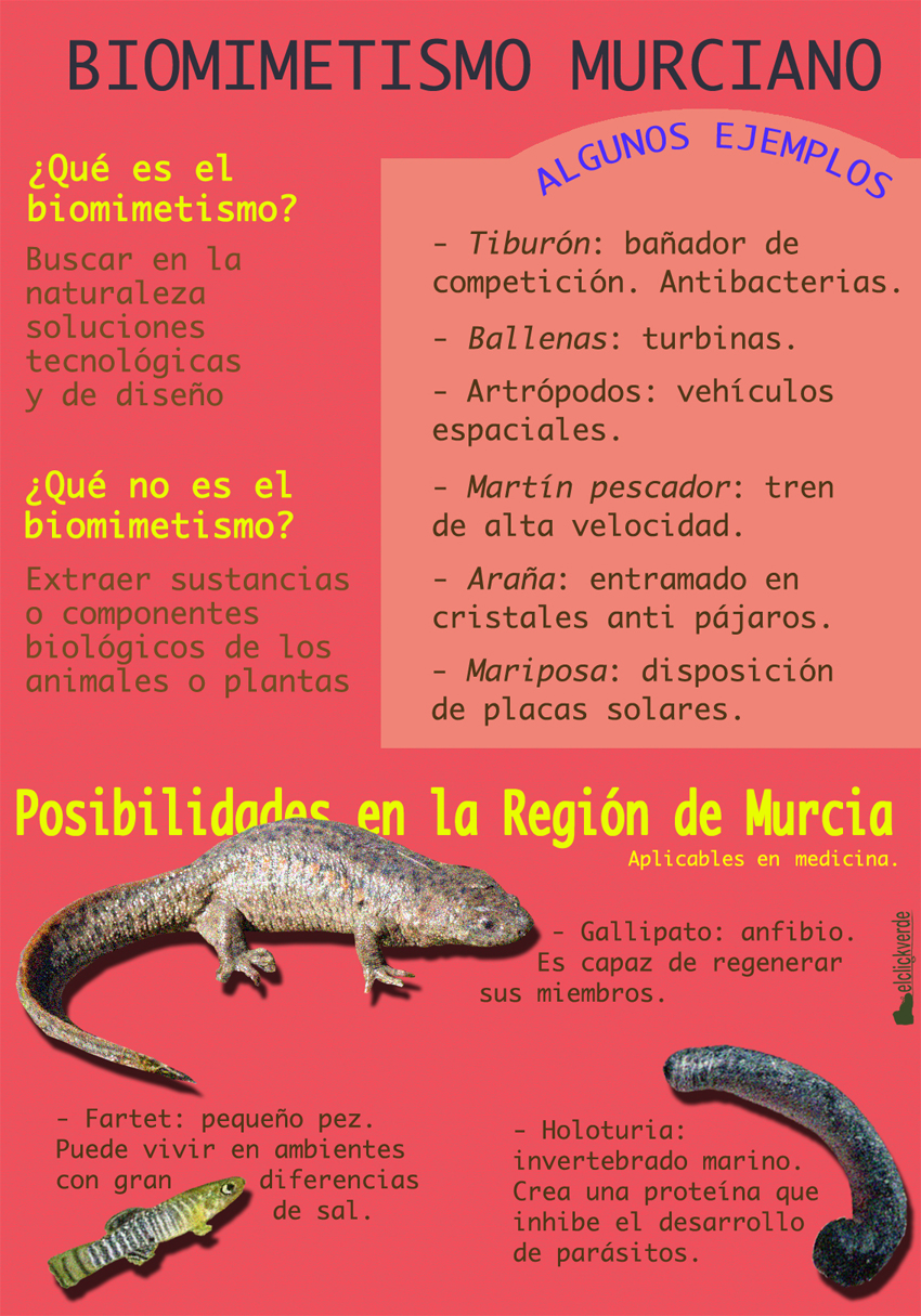 Ideas sobre el Biomimetismo. (Nota: fotografía original del gallipato, cedida por Ahemur)