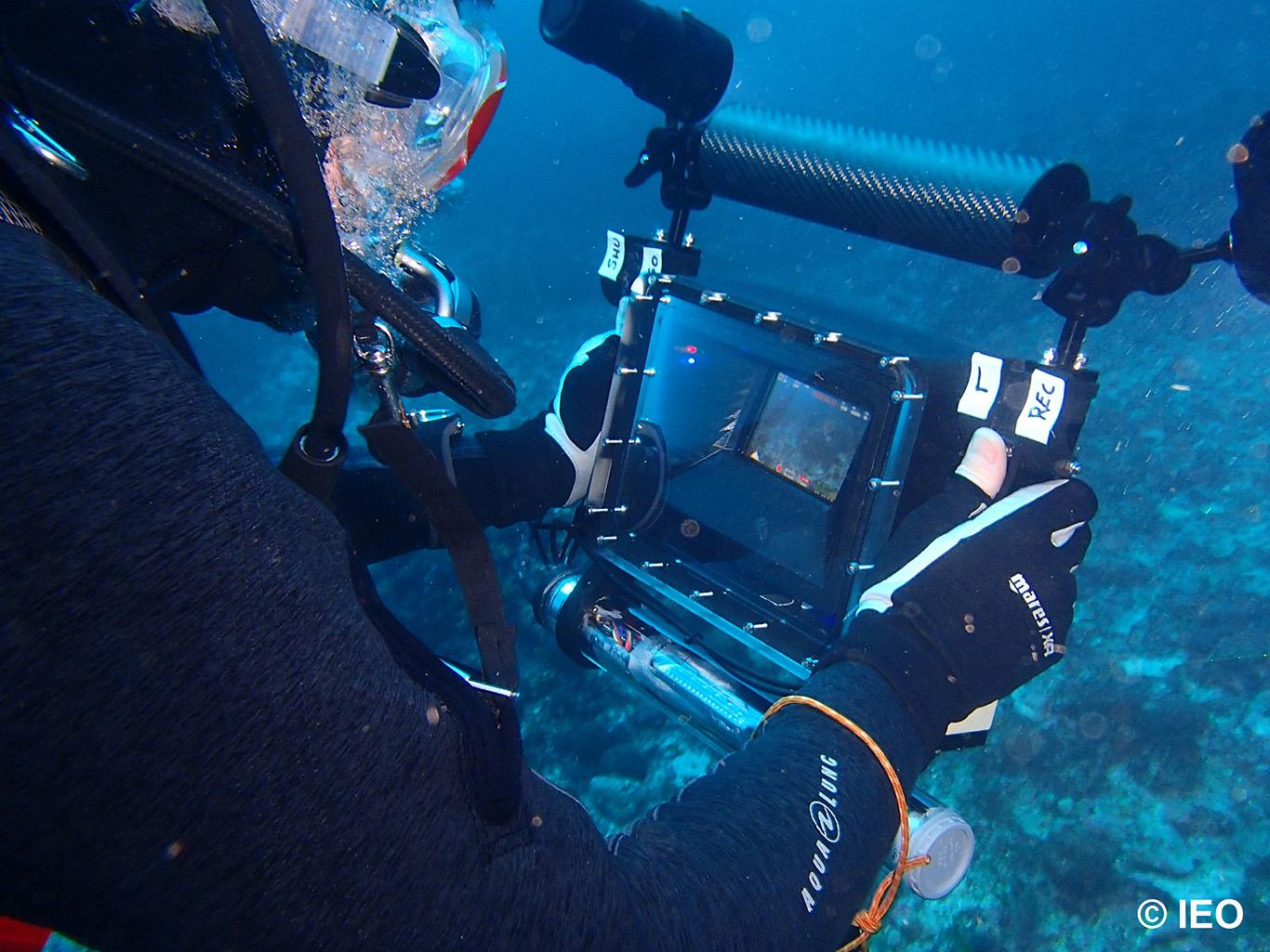 En el trabajo se hanusado sensores ópticos y fuentes de iluminación externa de última generación especialmente adaptadas para fondos marinos. Imagen: IEO