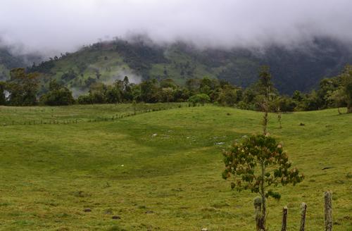 Bosque nublado del Valle de Quijos, en Ecuador. Foto: Nicholas Loughlin / CSIC