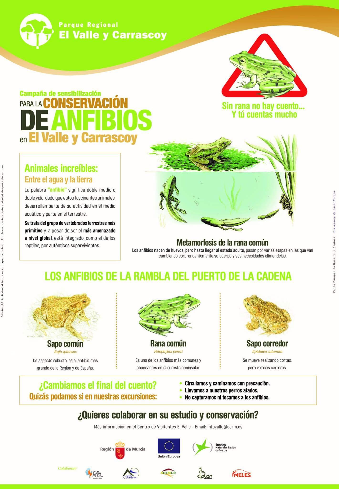 Detalles de los anfibios que pueblan el PR El Valle y Carrascoy