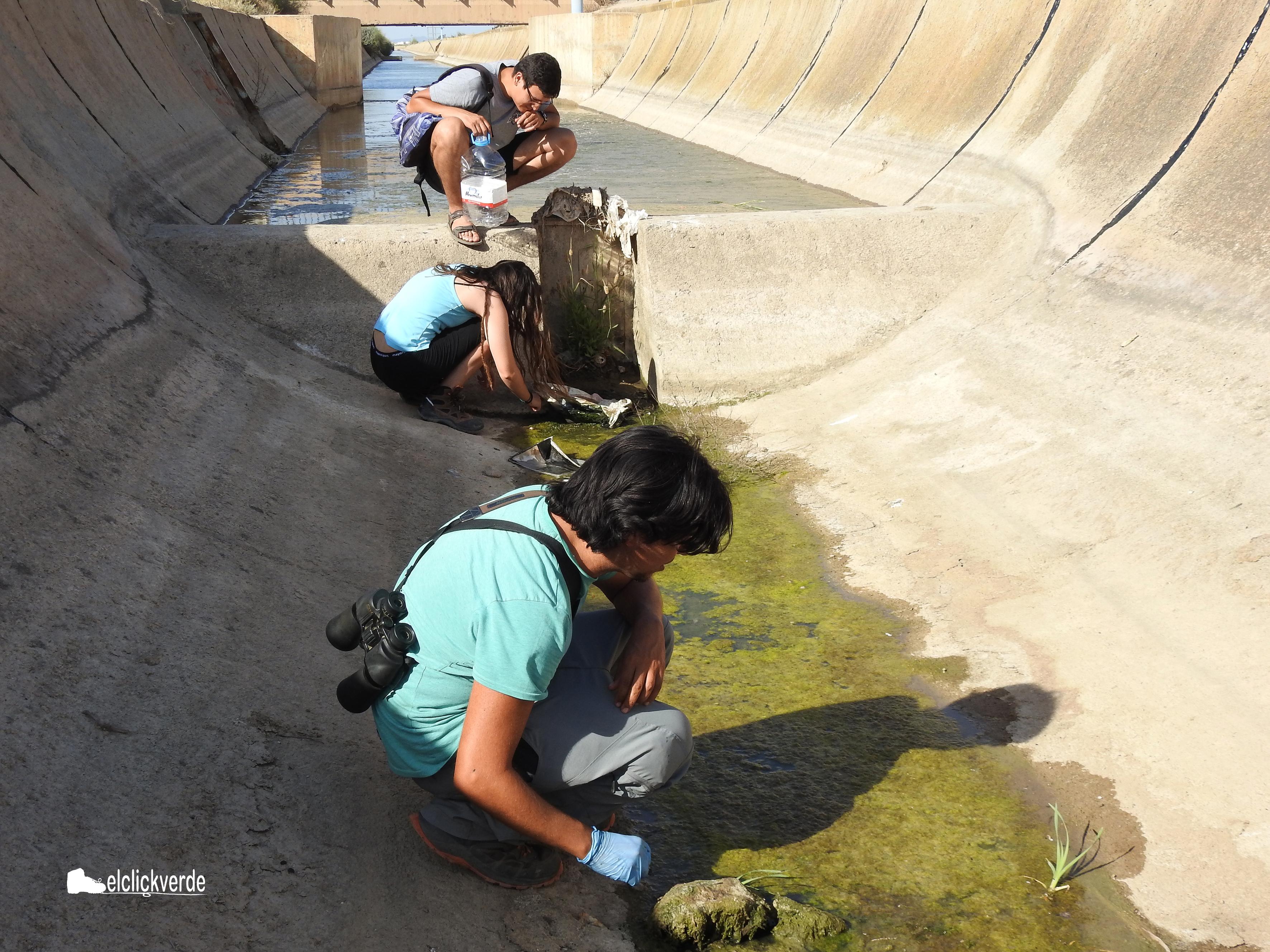 Rebuscando en el pequeño acúmulo de agua y fango
