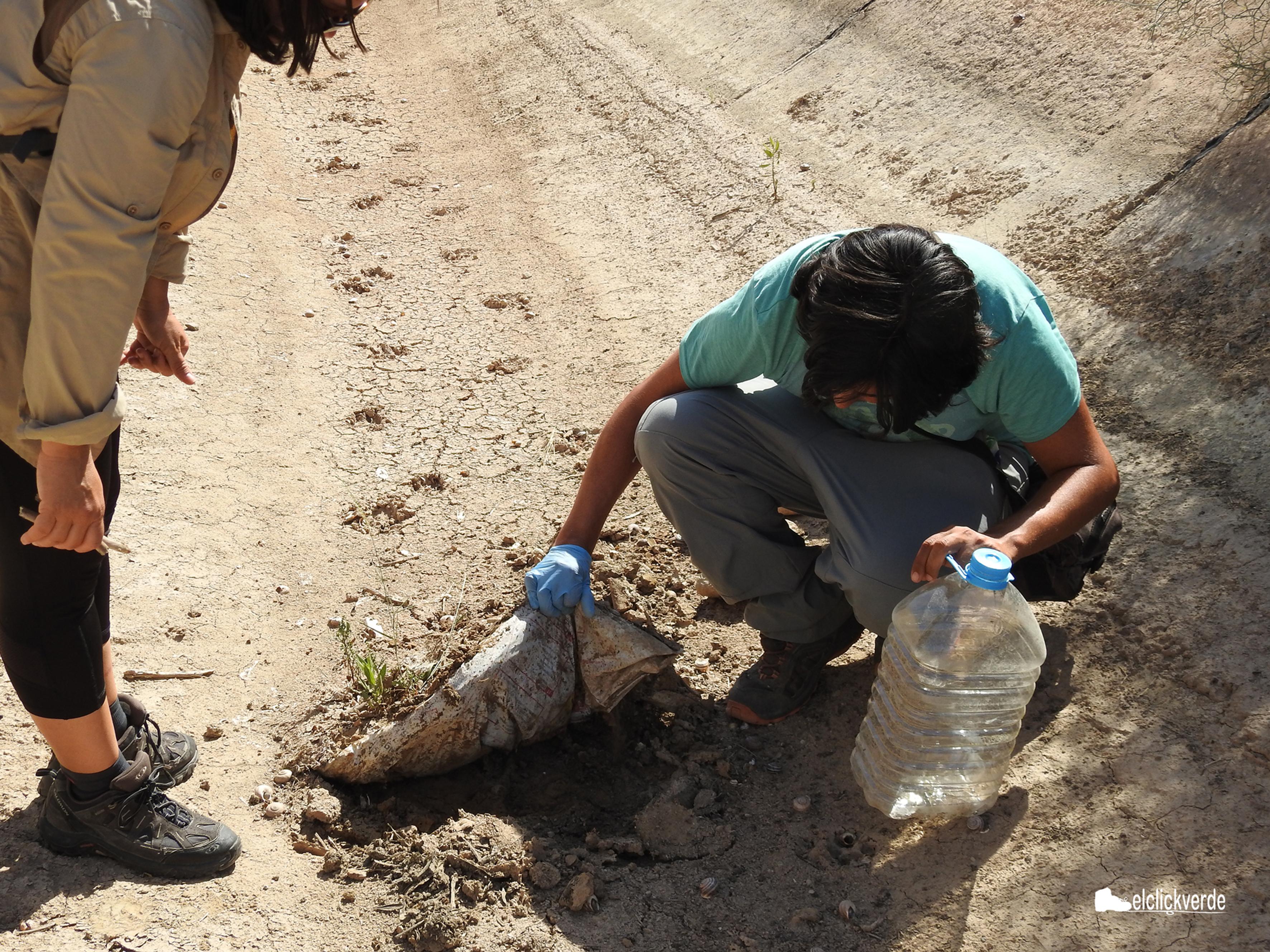Conrado Requena, levantando un plástico enredado en el tapiz de algas del canal