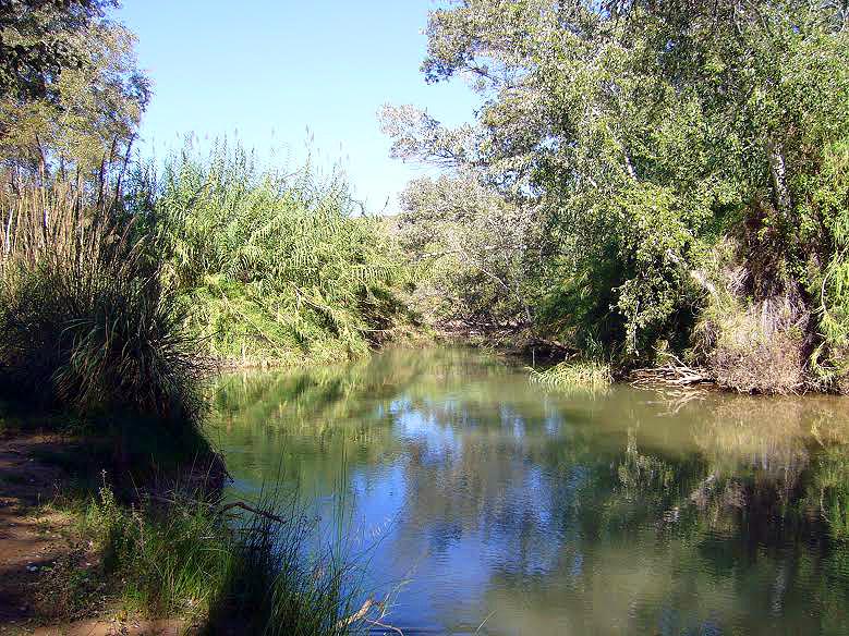 Vegetación de ribera en Cañaverosa (imagen: Belén Escudero).