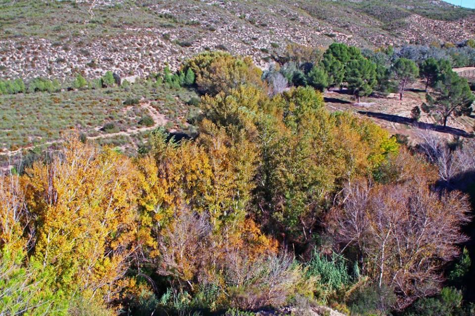 Vista superior del bosque de ribera (imagen cedida por EPlan).