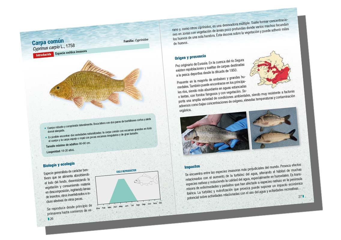 Ficha de la carpa, de la guía 'Peces dulceacuícolas de la cuenca del río Segura', de ANSE