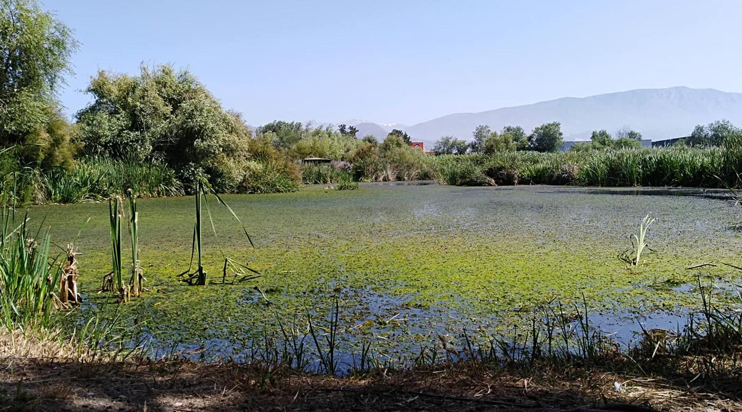 Una vista de la Charca de Suárez. Imagen: Rafael Mateos