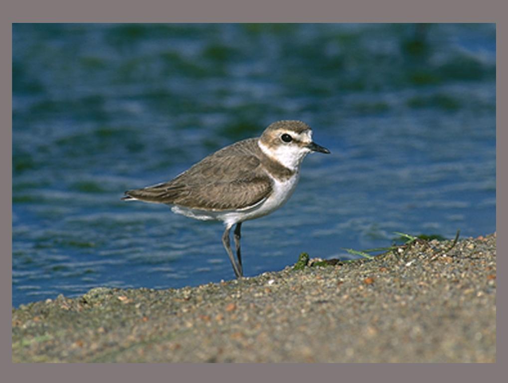 Imagen: SEO/BirdLife