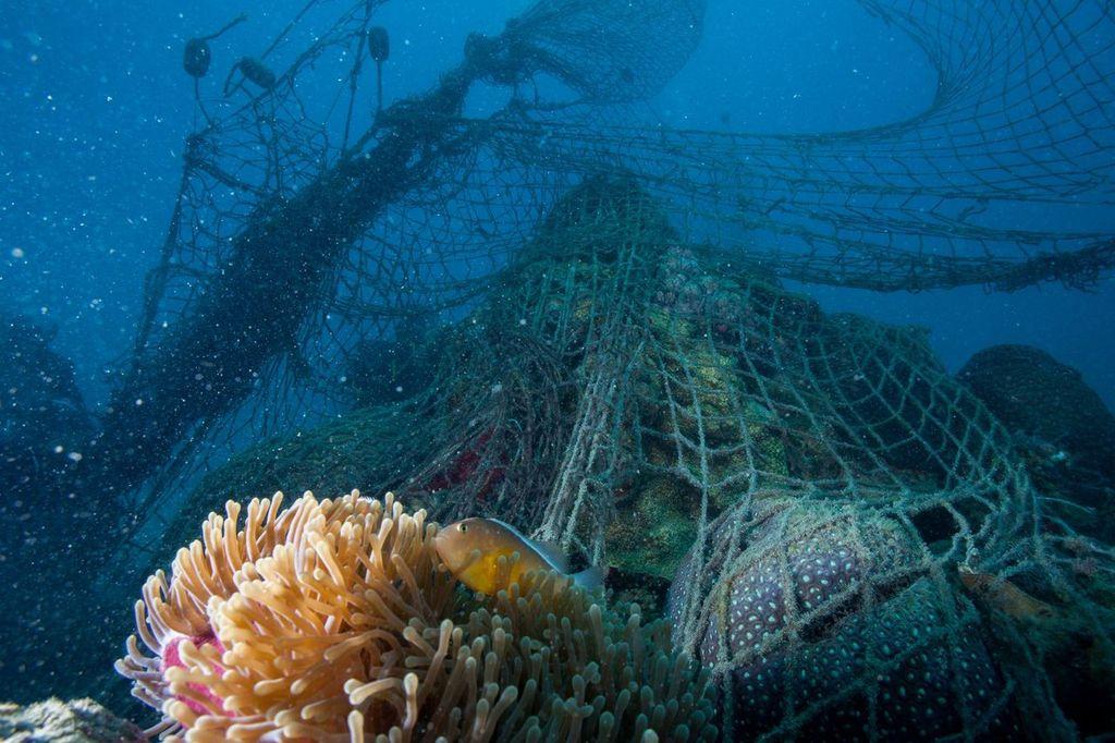 Las redes abandonadas pueden seguir atrapando especies como tortugas, tiburones, rayas y aves marinas durante décadas y tardan cientos de años en degradarse. Imagen: WWF