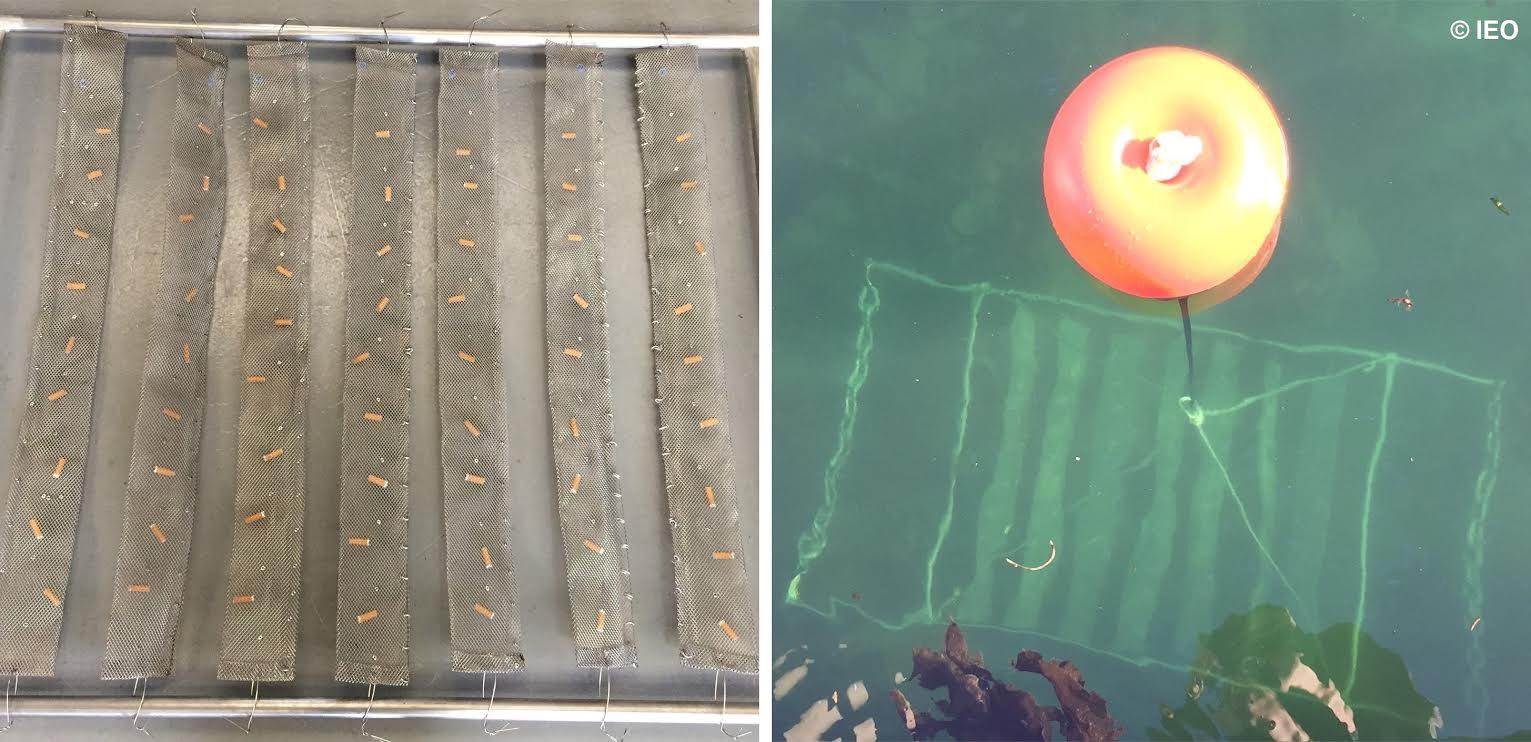 La investigación ha demostrado el aumento de las concentraciones de estroncio, manganeso, uranio, cromo, hierro, molibdeno, plomo y zinc en las ostras expuestas. Imagen: IEO