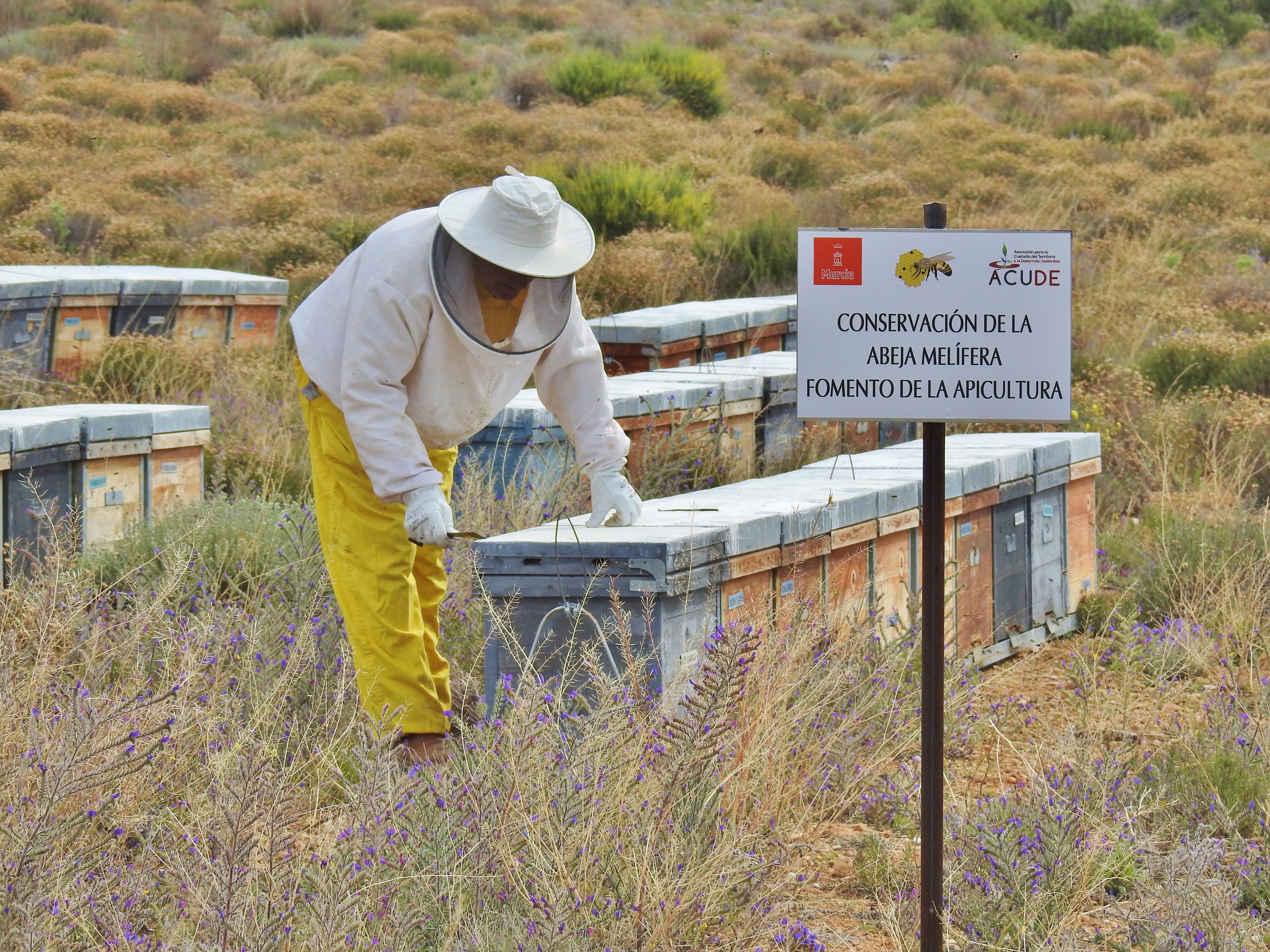 Se ha fomentado la apicultura con el mantenimiento de 300 colmenas en las fincas La Tercia y Los Santiagos. Imagen: Acude