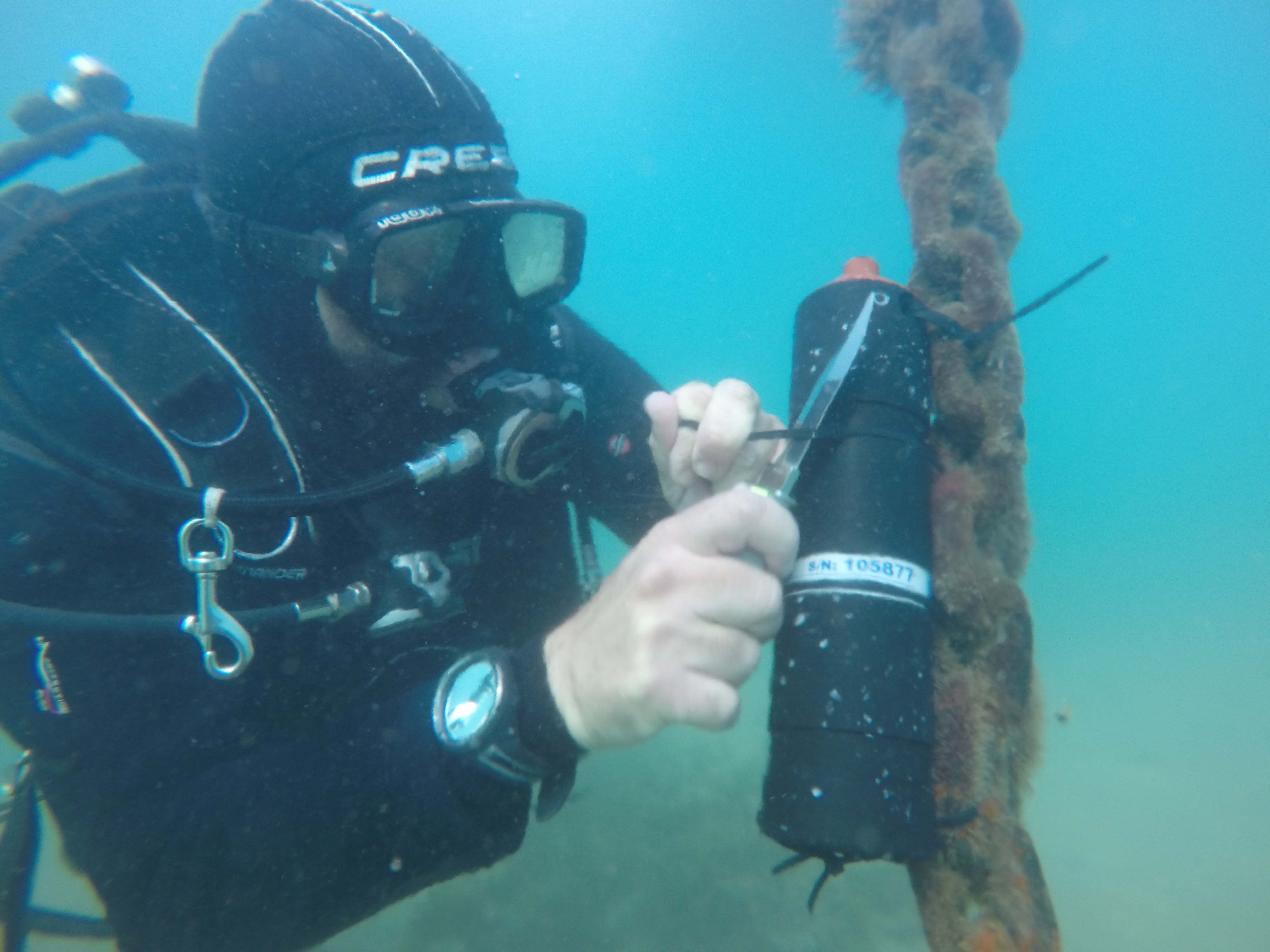 Colocación de receptor para detectar las anguilas marcadas. Imagen: Pedro García- ANSE