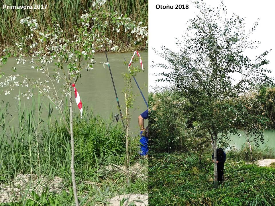 Comparativa que muestra la evolución del bosque de ribera de La Contraparada. Imagen: ANSE