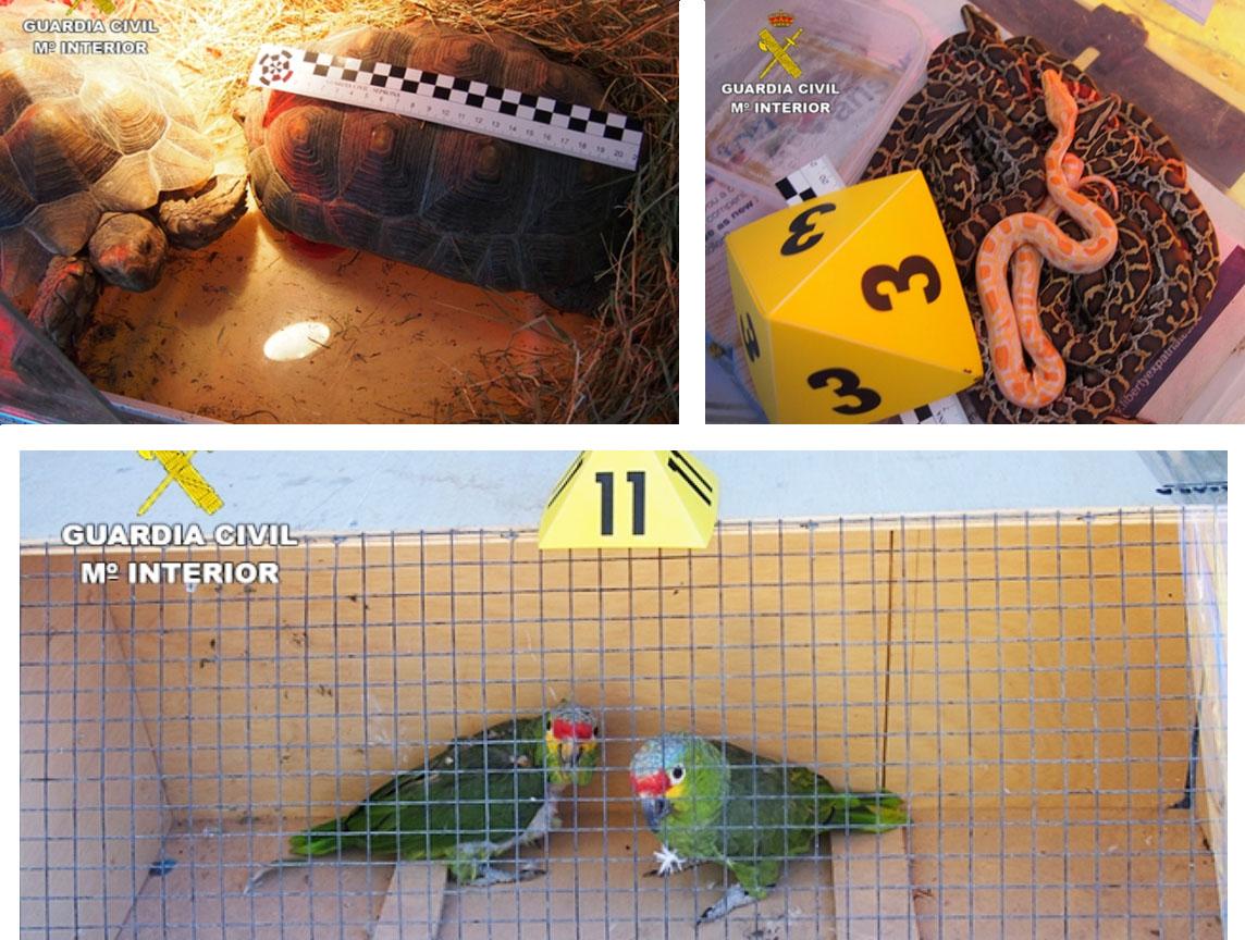 En la operación se han incautado aproximadamente unos 200 animales entre aves, mamíferos y reptiles. Imagen: Seprona